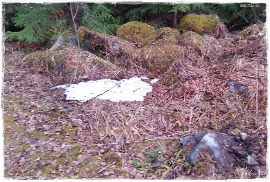 Än finns det lite snö kvar i skogen