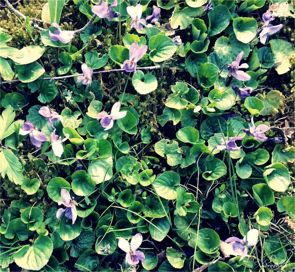 Jättesöta blommor i gräsmattan som jag aldrig sett här förut