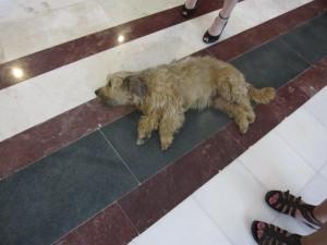 Hotellhunden